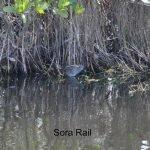 2015-02-16 Black Point Wildlife Drive