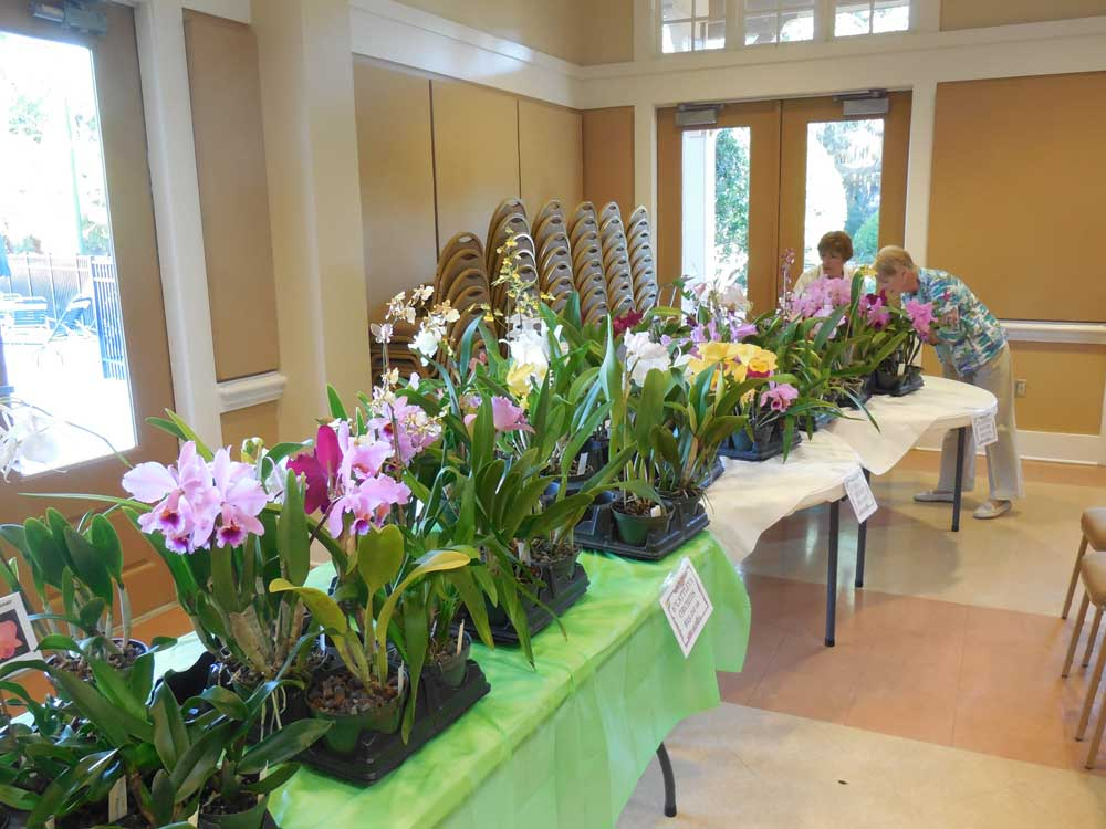 1-18-2017 Orchids