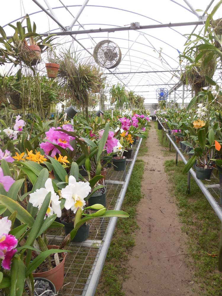 1-27-2017 Visit to Paradise Orchids