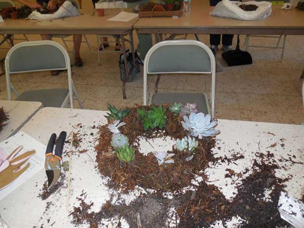 2014-10-22 Succulents