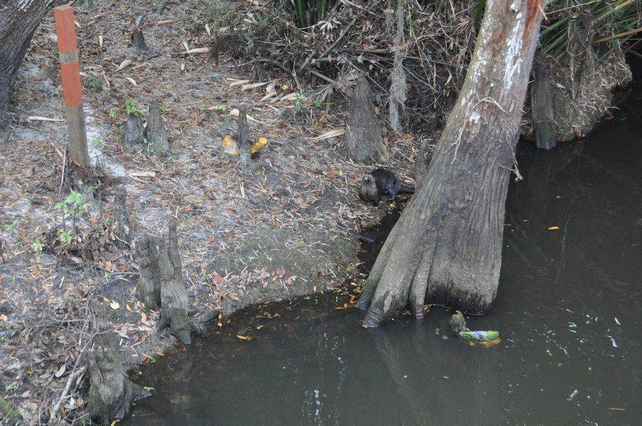 01-15-2018 Shingle Creek with Eleanor Forste