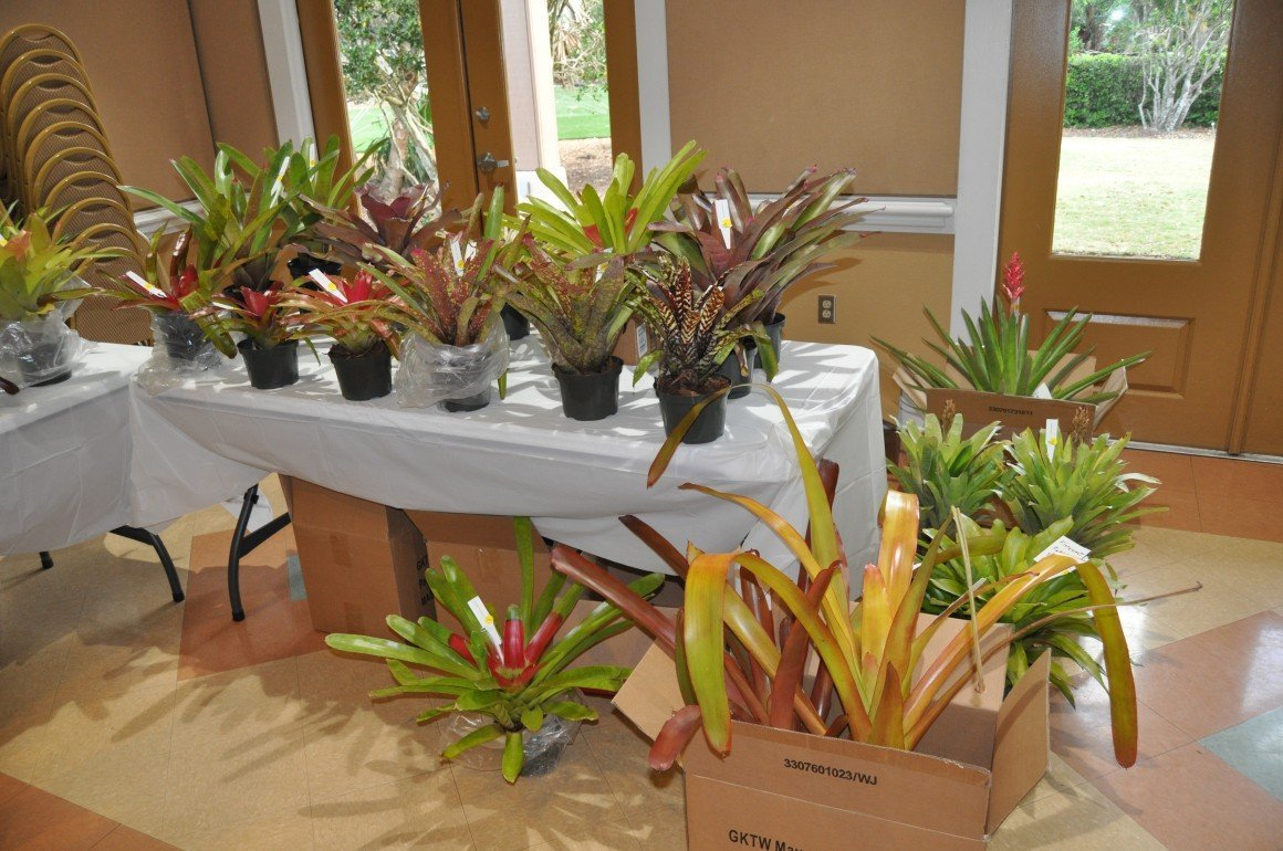 03-21-2018 Why Bromeliads by Marty Folk