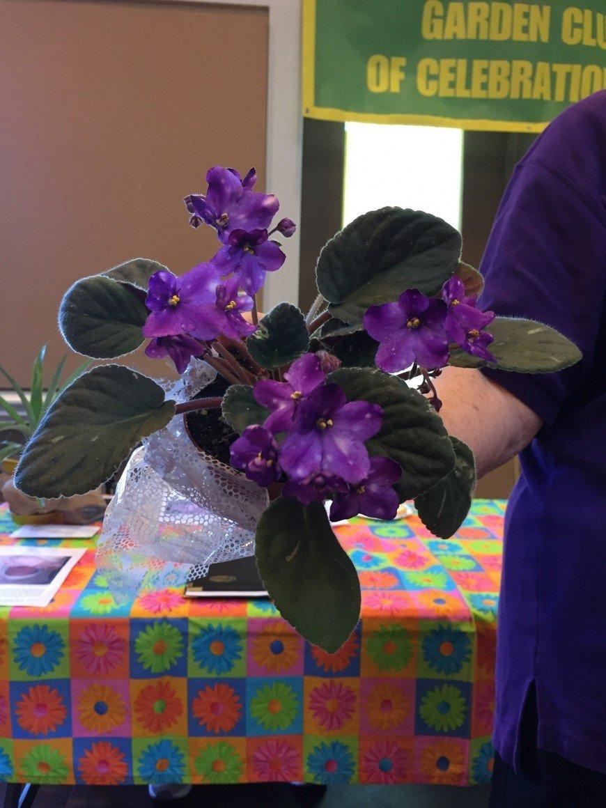 01-16-2019 African Violets