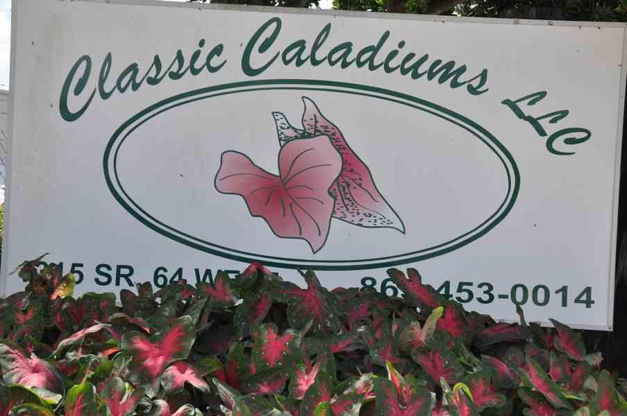 2019-10-04 Trip to Classic Caladiums