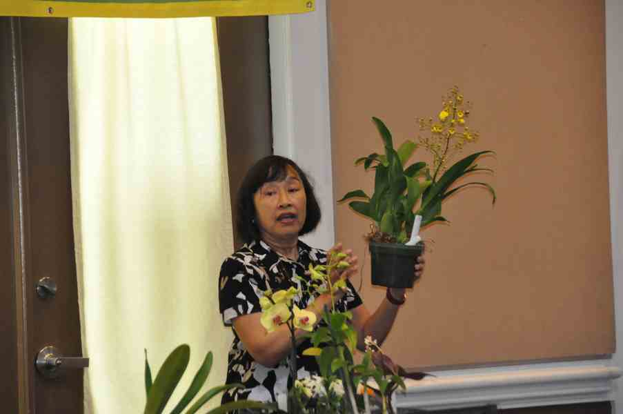 02-19-2020 Orchid Nanny – Care and rescue of orchids